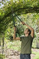 You can grow annuals, perennials, vegetables, and climbing shrubs on your arbor.