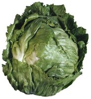 Iceberg lettuce is the most common type of head lettuce.