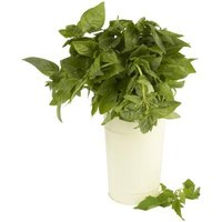 Fresh basil adds flavor and color to a dish.