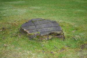 Tree stumps in your garden may be unsightly.