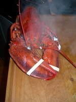 Find lobster, crab and shrimp on menus throughout northwest Indiana.