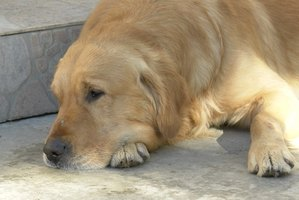 Bursitis can cause dogs to become sedentary.