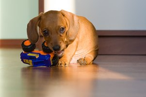 Monitor your puppy closely to avoid ingestion of inappropriate items.