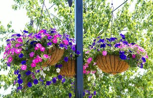 Use pulleys to easily lower and raise your hanging planters for watering.