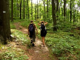 Hikers should know how to spot poisonous plants.
