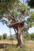 A tree fort is a great project for kids.