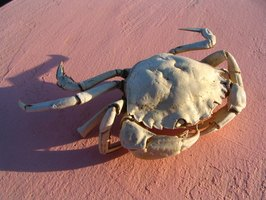 Crabs are a specialty food along New Jersey's coastline.
