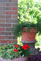 Choosing plants adapted to Florida is the best way to plant a successful container garden
