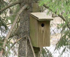 Building this birdhouse is a quick and easy project.