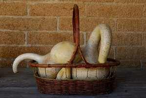 Paint swan neck gourds.