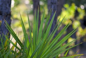How to Care for a Parlor Palm