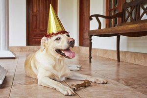 A happy dog wearing a party hat resting on the floor with a bone.
