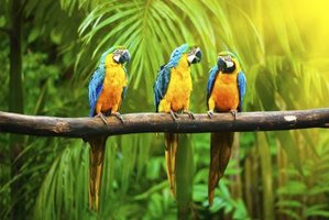 Parrots live in flocks and communicate through squawks, screeches and screams.