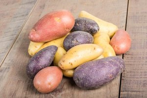 Fingerling potato tubers have various skin colors.