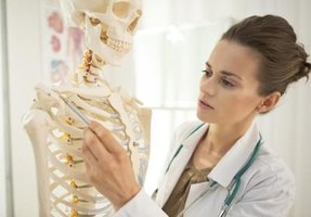 Human anatomists' salaries are contingent on their experience and specialties.