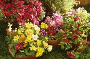 Using planters concentrates color in the garden for increased visual impact.