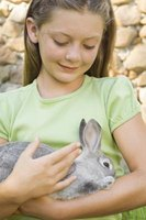 Rabbits are fastidious animals.