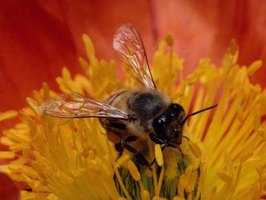 How to Kill Bees & Other Flying Insects With Household Products