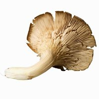 Commercial sales of mushrooms topped $1 billion in the 2010-11 growing season.