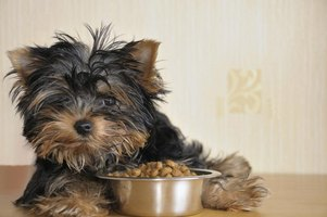 Small dog laying beside bowl of food.
