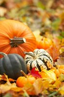 Pumpkins are heavy feeders and require enriched soil.