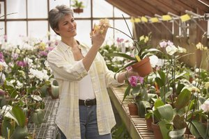A personal garden greenhouse can greatly extend your growing season.