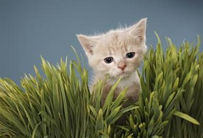 Kittens and cats love munching on plants.