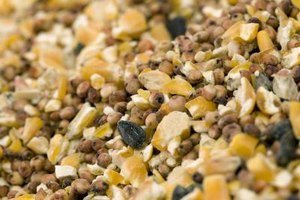 Black-oil sunflower seeds stand out from other offerings.