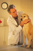 Lymphoma is the most common cancer in dogs.