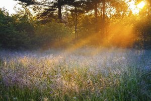 Rays of sunlight shining across a flowering meadow.
