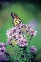 Native wildflowers attract butterflies to the landscaping near your home.