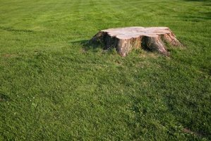 You can get rid of a tree stump without harsh chemicals.