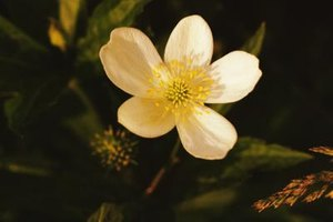 Rare Plants in a Taiga Biome | eHow