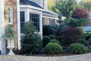 Add shrubs and trees to decorate your home's exterior.