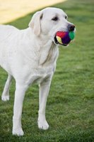 Make an automatic dog ball thrower to satisfy energetic dogs.