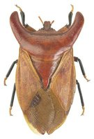 The Best Way To Get Rid Of Stink Bugs Ehow