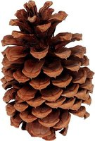 Don't let pine cones go to waste.