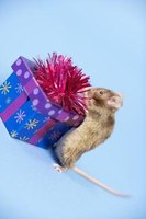 Your home can be a gift for a homeless mouse.