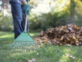 Use a lightweight leaf rake to thin leaves in your flower beds.