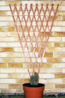 A fan trellis anchored to the wall supports heavy vines.