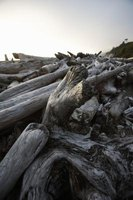 Driftwood can be used for a variety of furniture items, such as coffee tables and beds.