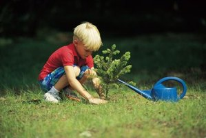 Use a drain spade to dig planting holes for small trees and shrubs.
