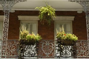 Staghorn ferns are popular in hanging baskets.