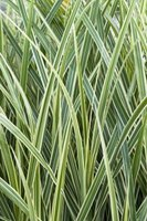 Ornamental grass is a good choice in USDA zone 7.