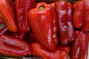 All peppers, like these hot peppers, prefer acidic soils.