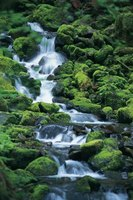 Moss naturally covers rocks along cold water streams and waterfalls.