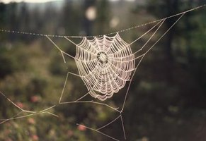 Make a large spider web decoration to hang outdoors.