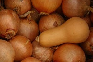Butternut squash is easily recognized by its pear shape and pale tan color.