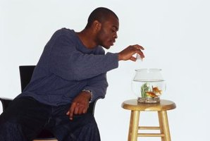 Your fish's loss of appetite can be attributed to a problem as simple as overfeeding.