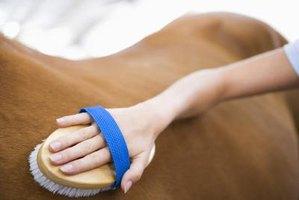 how to make horse coat shiny